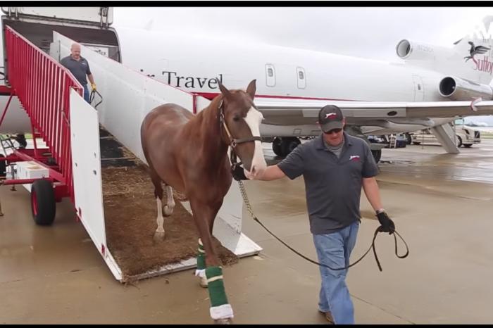 """VIDEO! Avionul Boeing 727 cu care zboara caii de curse de milioane de dolari. """"Air Horse One"""" este ultima fita in materie pentru milionarii pasionati de hipism"""