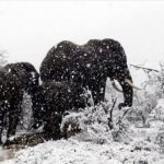 Africa inzapezita! Vezi poze cu girafe, antilope si elefanti in zapada