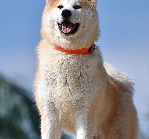 Un câine a devenit erou național după ce și-a dat viața ca să salveze doi copii!