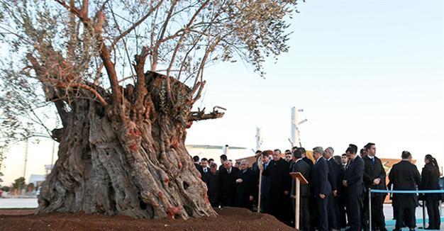 Parc cu 100 de măslini, inaugurat la Izmir, Turcia, cu ocazia Centenarului FOTO