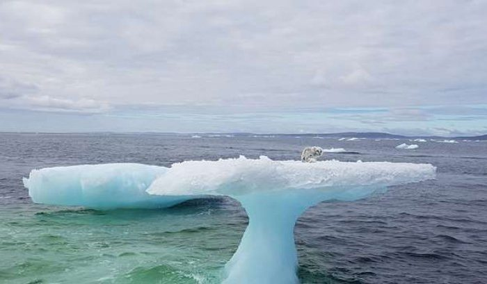 Descoperire șocantă pe un aisberg din Atlantic! Marinarilor nu le-a venit să creadă