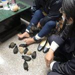 Pasea ciudat in aeroport pentru ca facea trafic cu animale