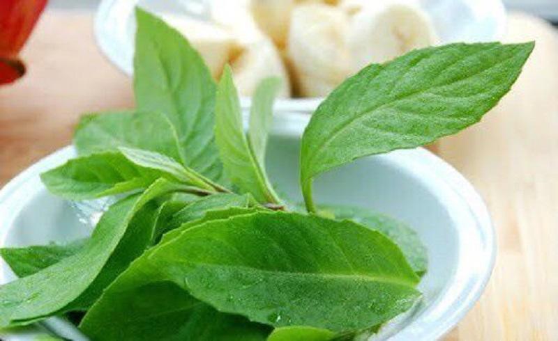 Elixirul tineretii, descoperit intr-o planta (2)