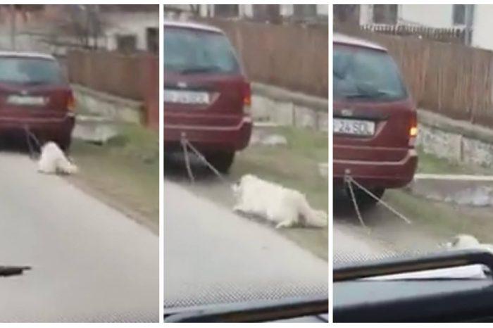 Un viceprimar a TRAS un caine cu masina! Imaginile sunt revoltatoare VIDEO