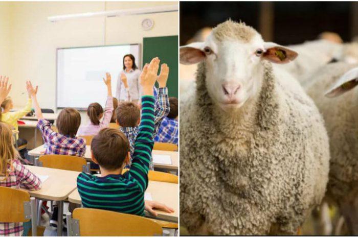 De ce au fost 15 oi inscrise la o scoala, in Franta! Cazul uimitor a atras atentia autoritatilor