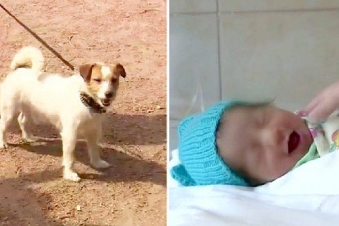Bebelus salvat de caine, dupa ce a fost abandonat de mama lui si lasat sa moara! VIDEO