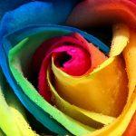 """Felicitari cu flori. Cele mai frumoase imagini cu mesaje de """"La multi ani!"""""""
