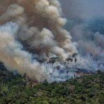 Leonardo DiCaprio, donatie colosala de 5 milioane de dolari pentru salvarea padurii amazoniene