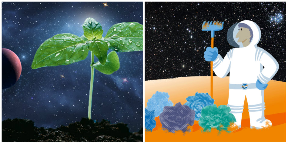 NASA vrea sa creasca legume in spatiu