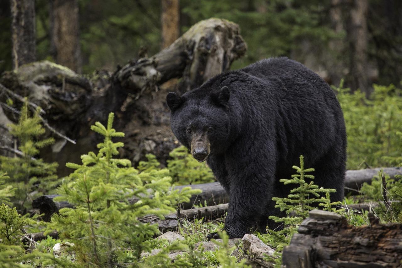 Femeie de 50 de ani, atacată de un urs
