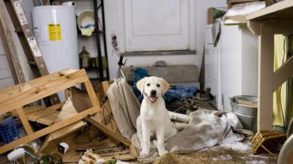 """Românii spun """"ADIO"""" animalelor de companie ținute la bloc. Decizia este oficială. Toți iubitorii de animale trebuie să știe asta."""